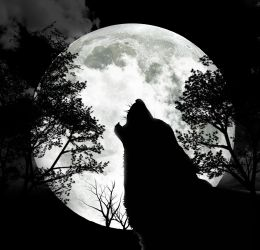 Moon Wolf Wallpapers Wallpaper Cave