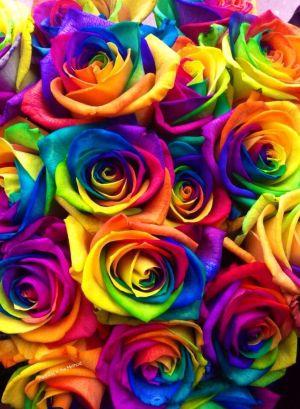 rainbow roses flower rose flowers colorful wallpapers iphone floral creative backgrounds phone rosa rosen regenbogen eckig diamond painting aesthetic travel