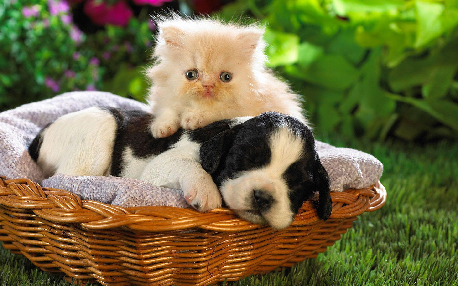 cute animal backgrounds wallpaper