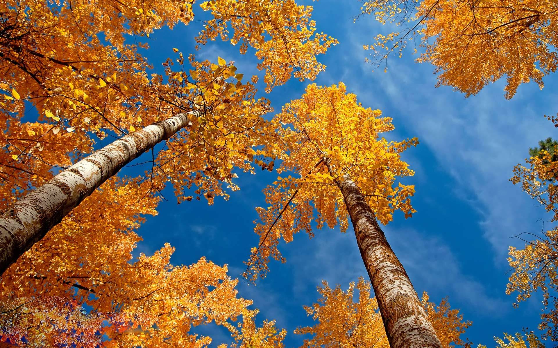 Falling Skies Wallpaper Autumn Trees Wallpapers Wallpaper Cave