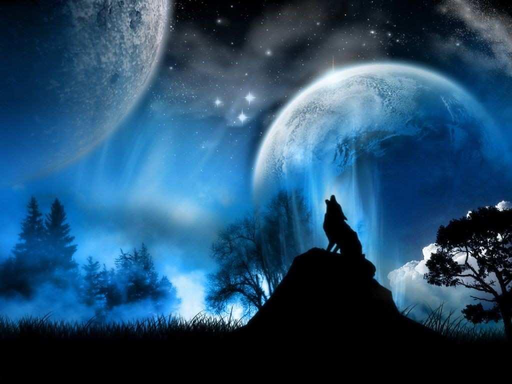 Black Wolf Howling Wallpaper Novocom Top