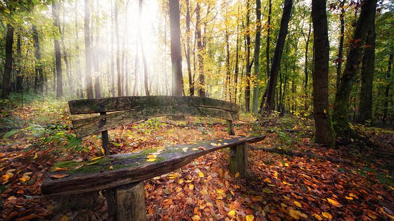 Autumn Fall Wallpaper 1600x900 Beautiful Autumn Forest View Hd Wallpaper Wallpaperfx