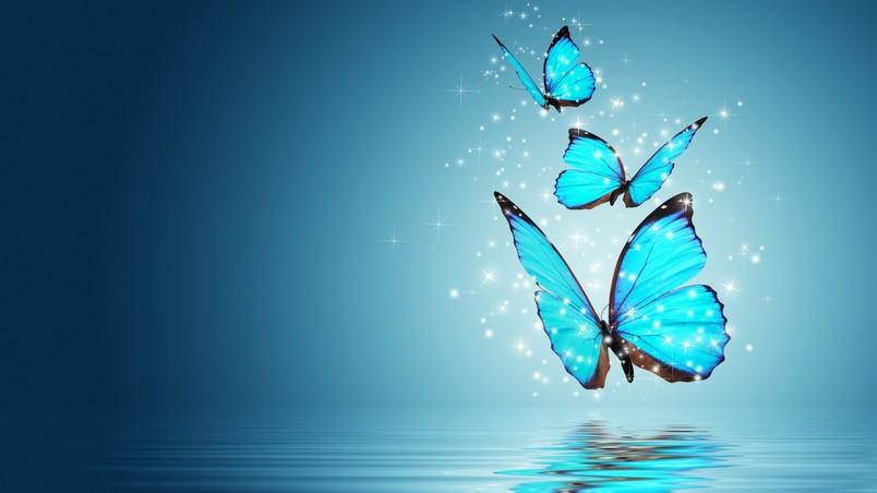 Cars Hd Wallpaper For Computer Design Blue Butterflies Hd Wallpaper Wallpaperfx
