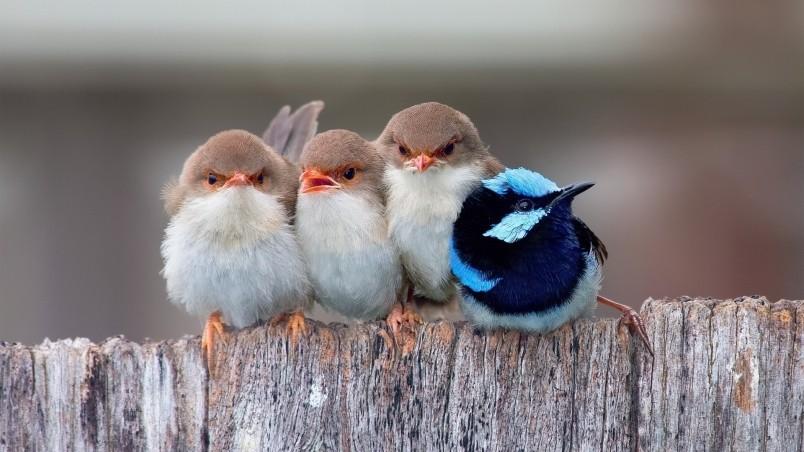 Cute Animated Wallpapers Free Download Cute Little Birds Hd Wallpaper Wallpaperfx