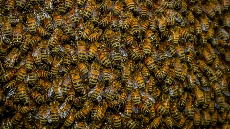 Mortal Kombat X Wallpapers Hd Iphone Swarm Of Bees Hd Wallpaper Wallpaperfx