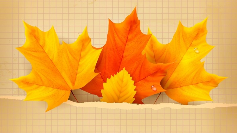 Beautiful Fall Location Wallpapers 3 Beautiful Autumn Leaves Hd Wallpaper Wallpaperfx