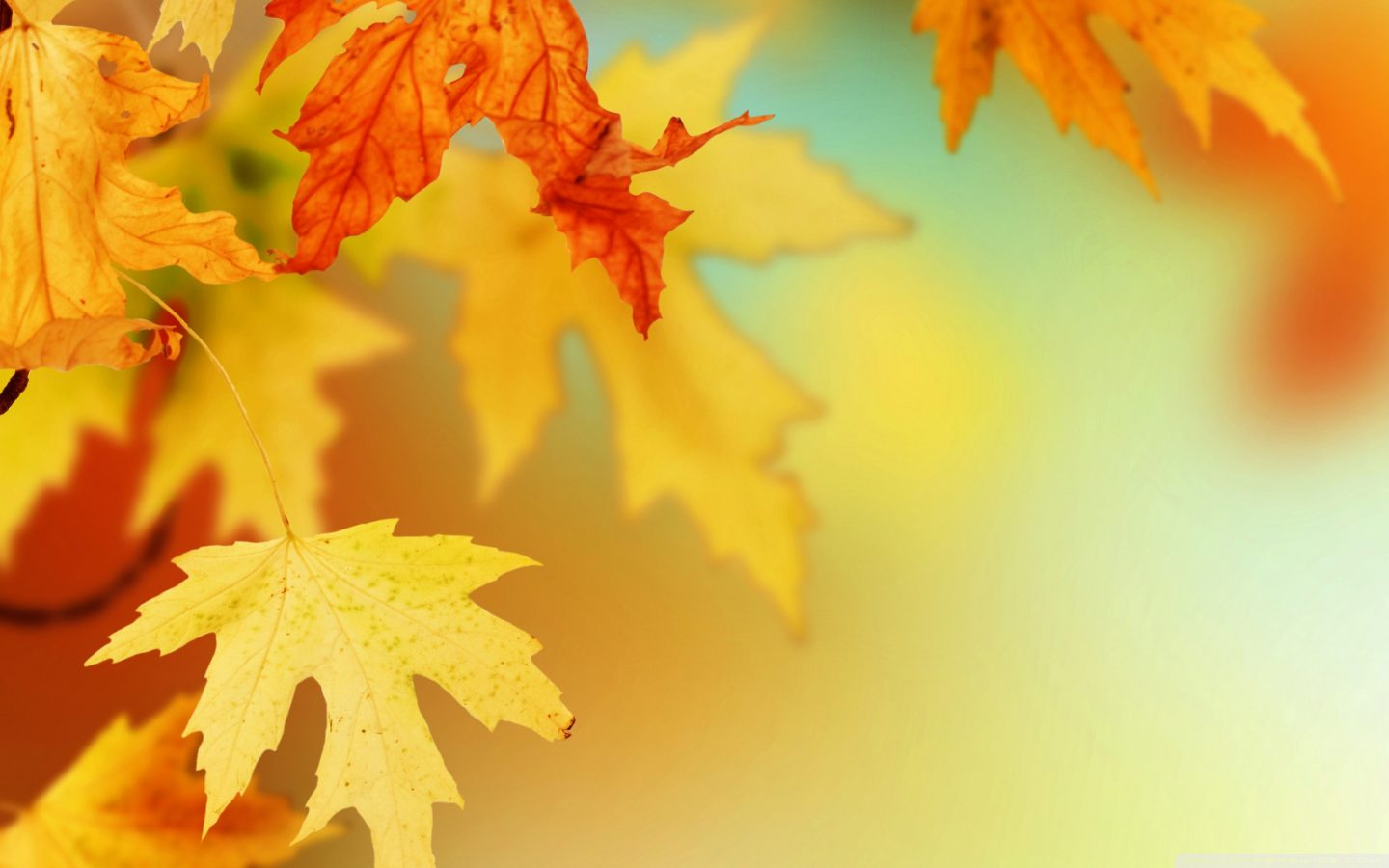 Fall Leaves Live Wallpaper Iphone Natural Background Hd