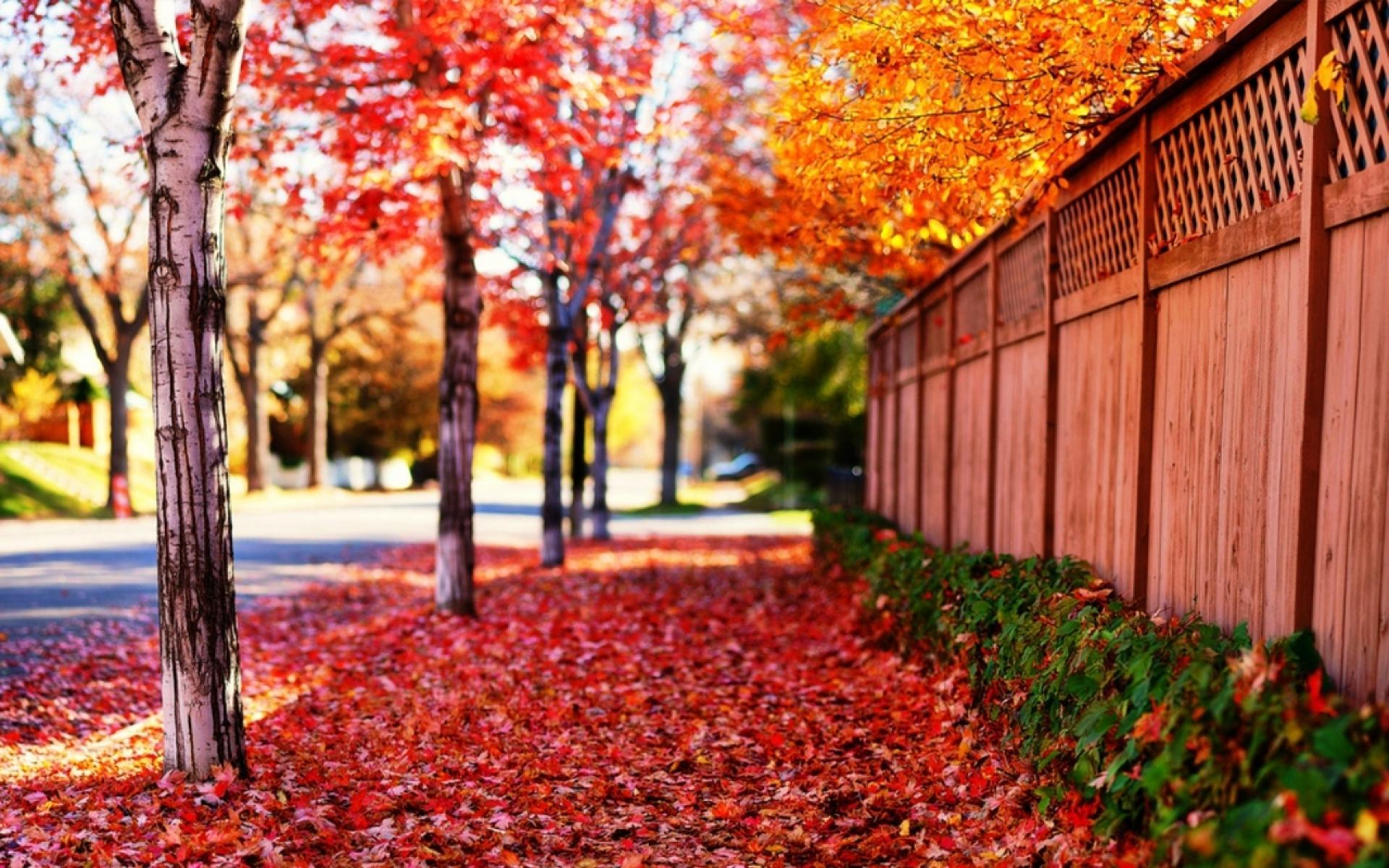 Falling Leaves Live Wallpaper Download Desktop Wallpaper Hd Full Screen Nature