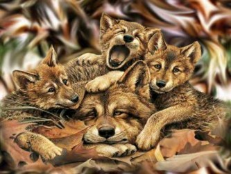 wolf wolves cute animal nice humor funny animals wallpapers mom never done mother dogs crazy kingdom background hd fanpop familly
