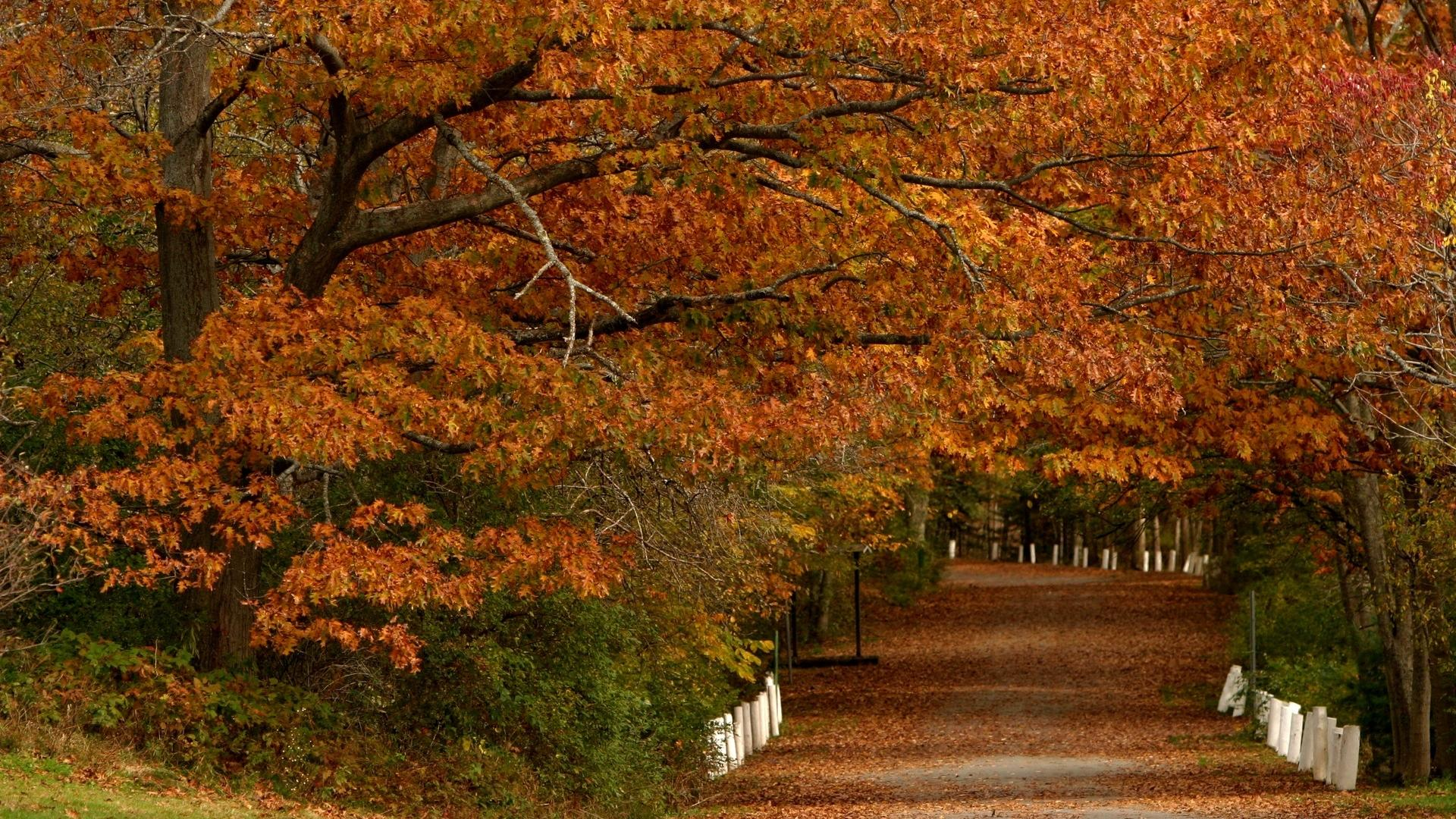 Fall Leaf Iphone Wallpaper Brown Cool And Free Wallpapers For Download At