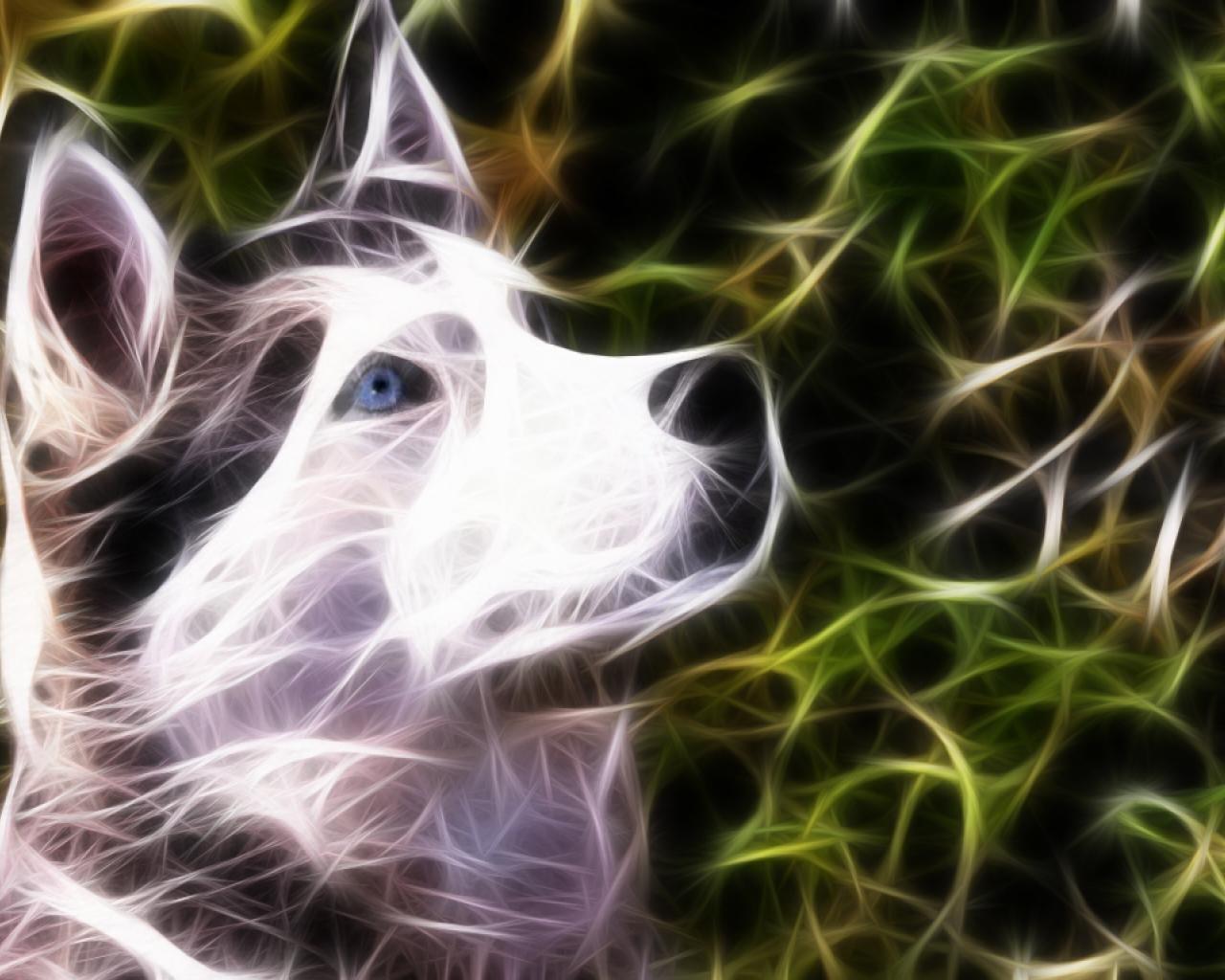 Cute Yoda Wallpaper Siberian Husky Wallpapers Hd For Desktop Backgrounds