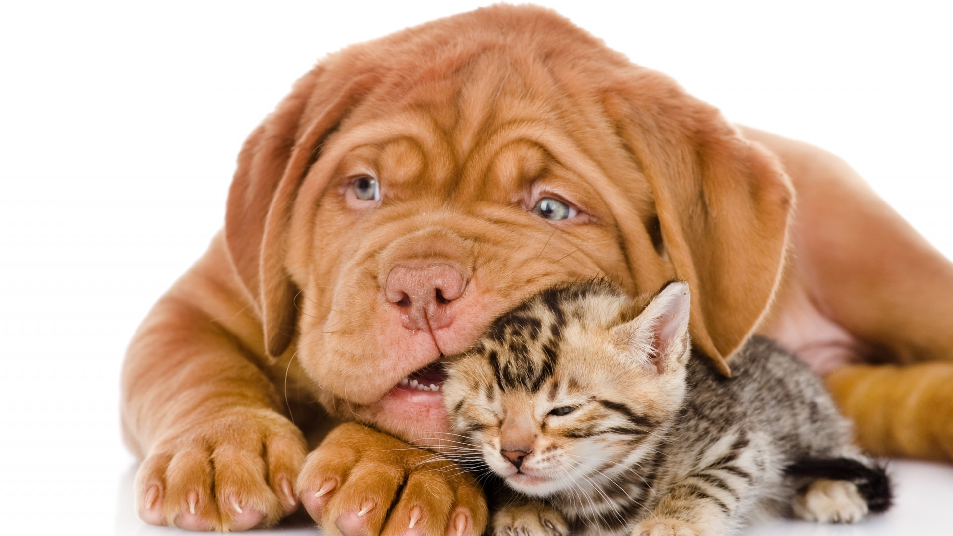 Cat And Dog Wallpapers X Full Hd P Desktop