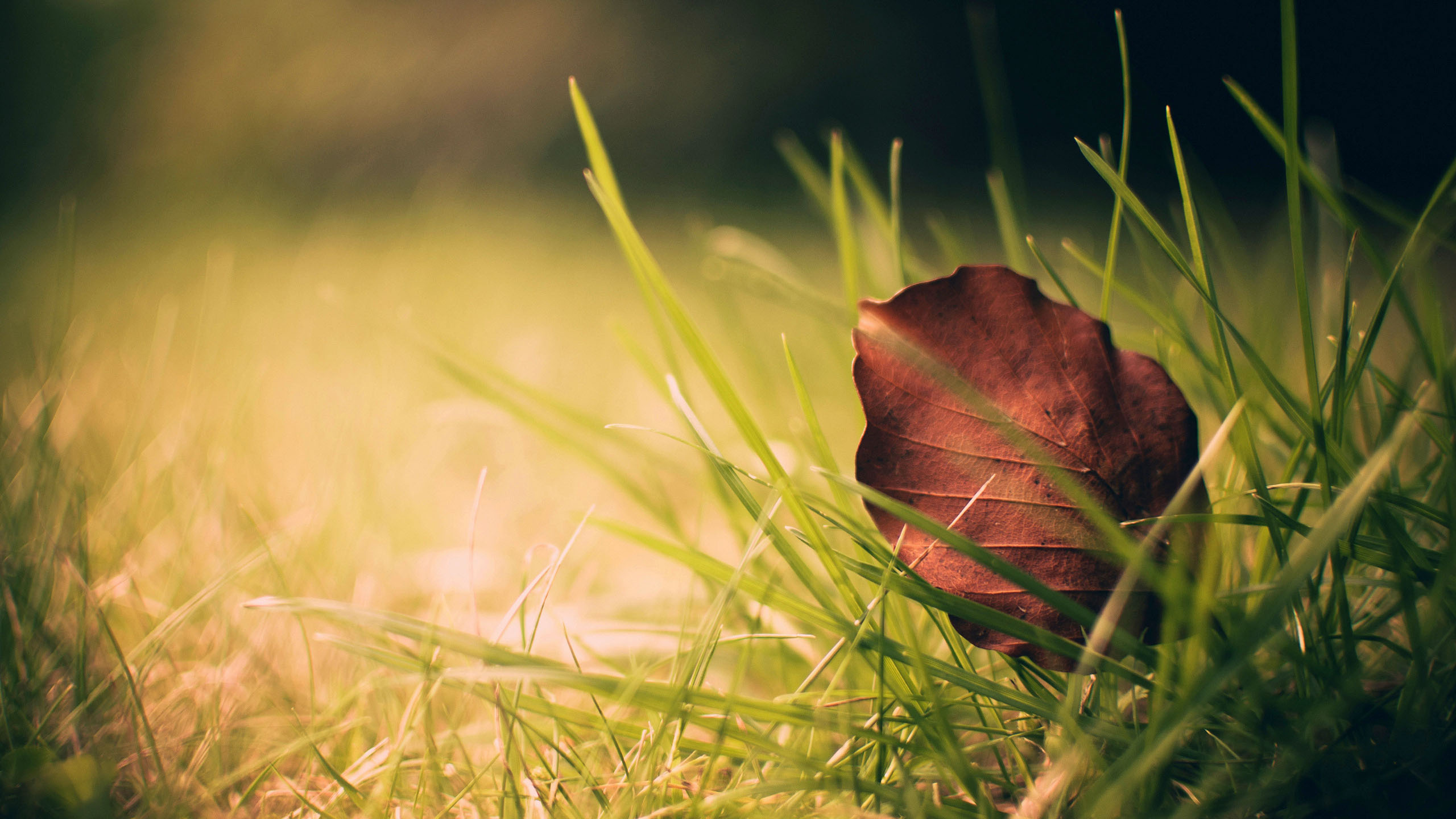 Tinkerbell Fall Wallpaper Natural Leaves Background Nature