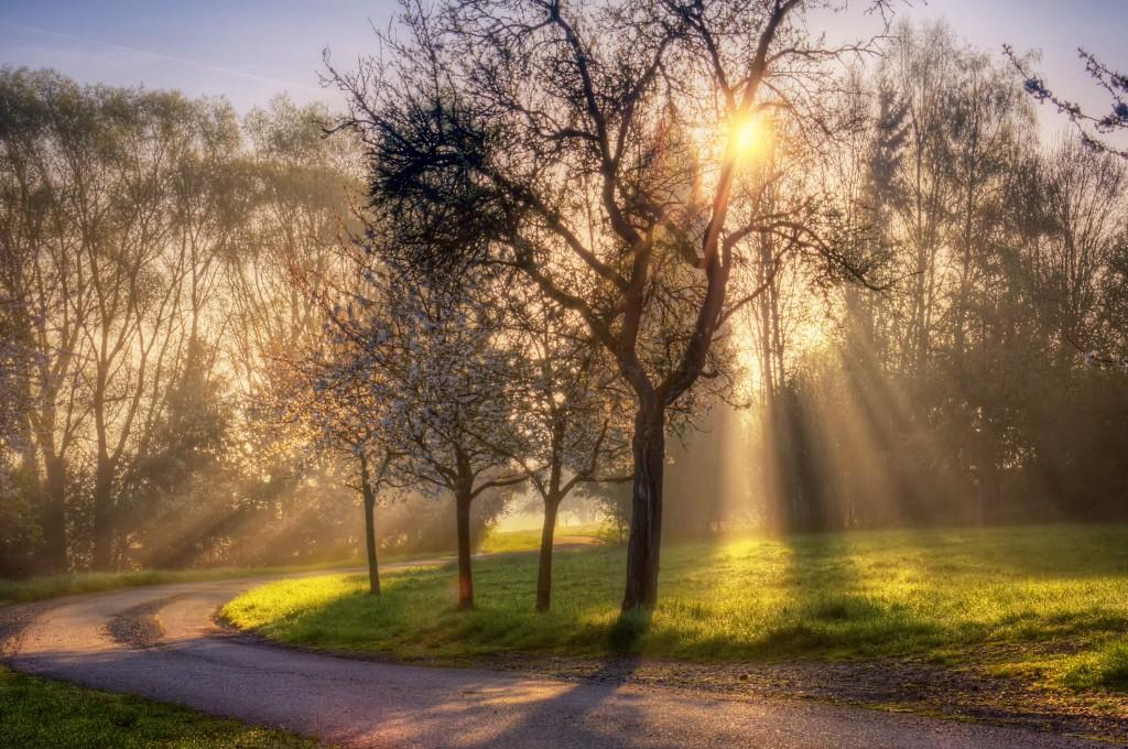 Computer Wallpaper Fall Leaves Sun Shining Through Trees Nature