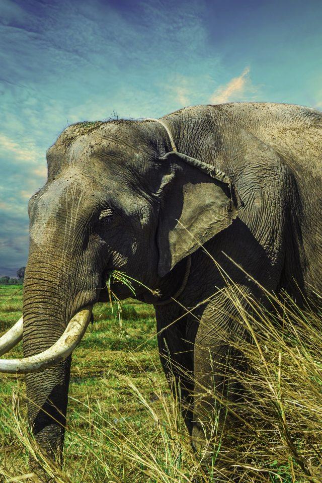 Eagle Wallpaper Iphone X Asian Elephant 4k Uhd Wallpaper