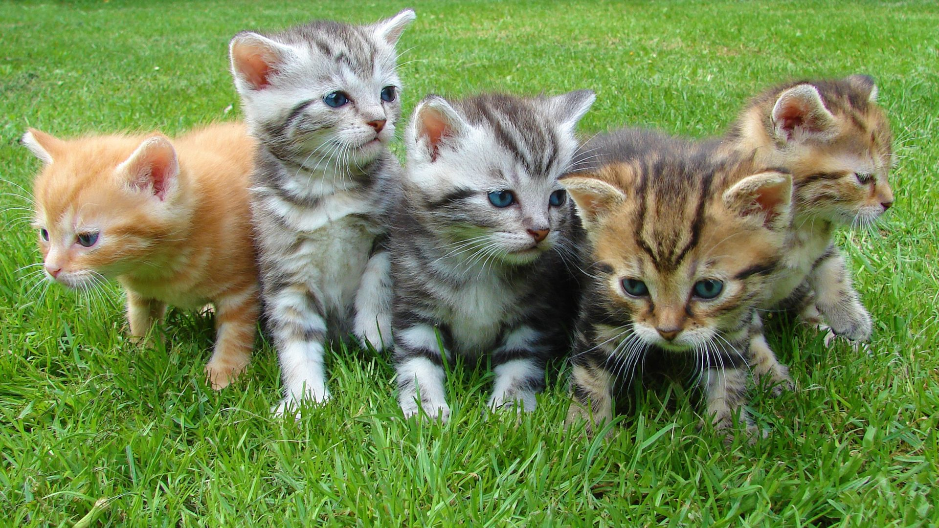 Army Iphone X Wallpaper Kittens In The Grass Hd Wallpaper