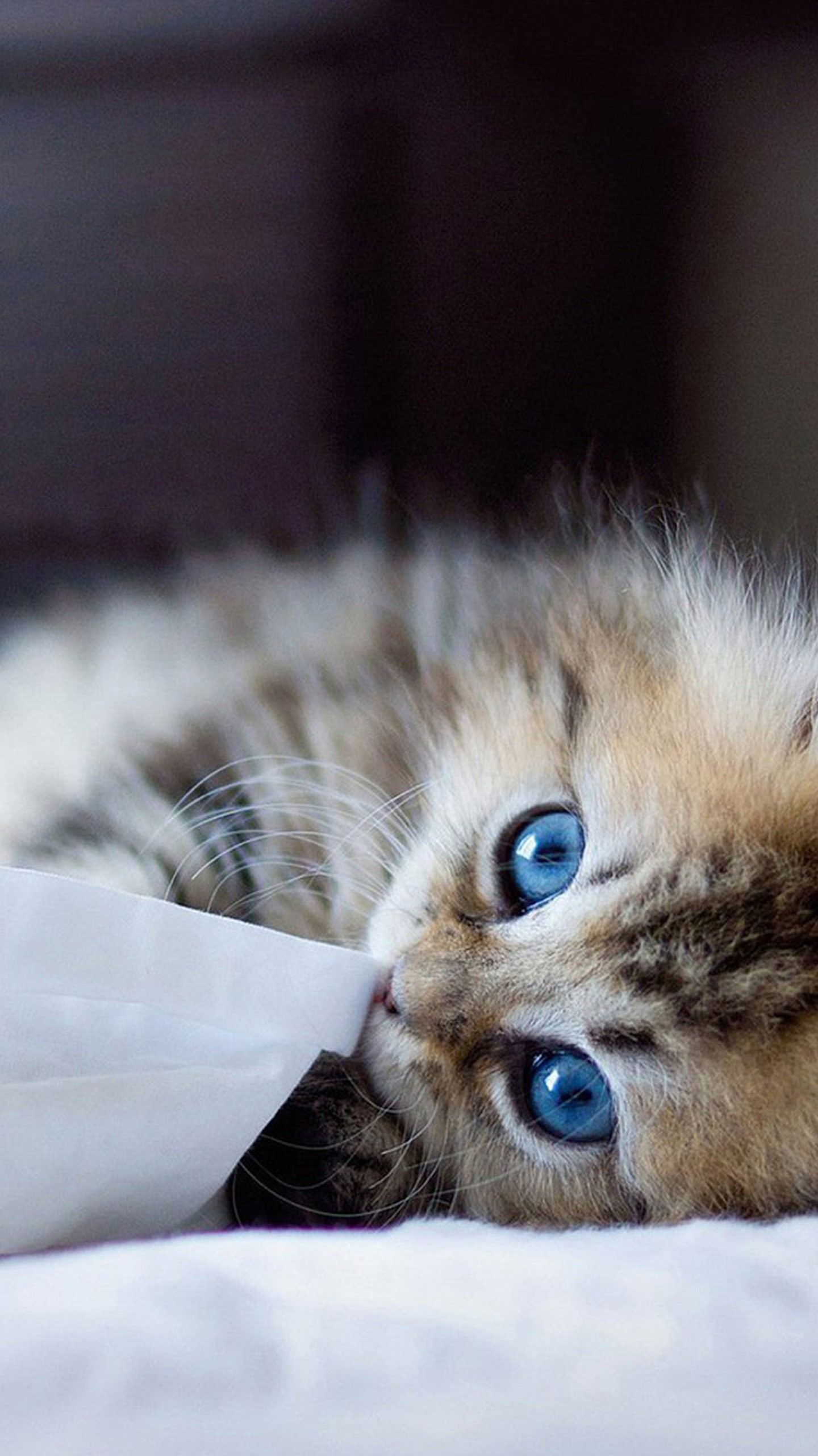 Cute Cats Wallpapers Download Cute Cats Hd Wallpapers For Galaxy S7 Wallpapers Pictures