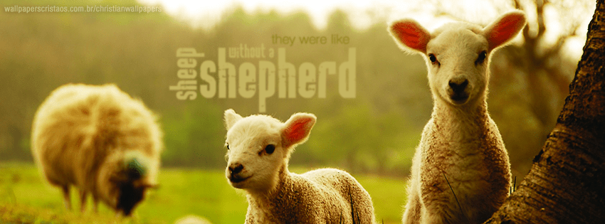 Cute Baby Hd Background Wallpapers Without A Shepherd Christian Wallpapers