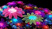 Colorful Flower Wallpaper 3D