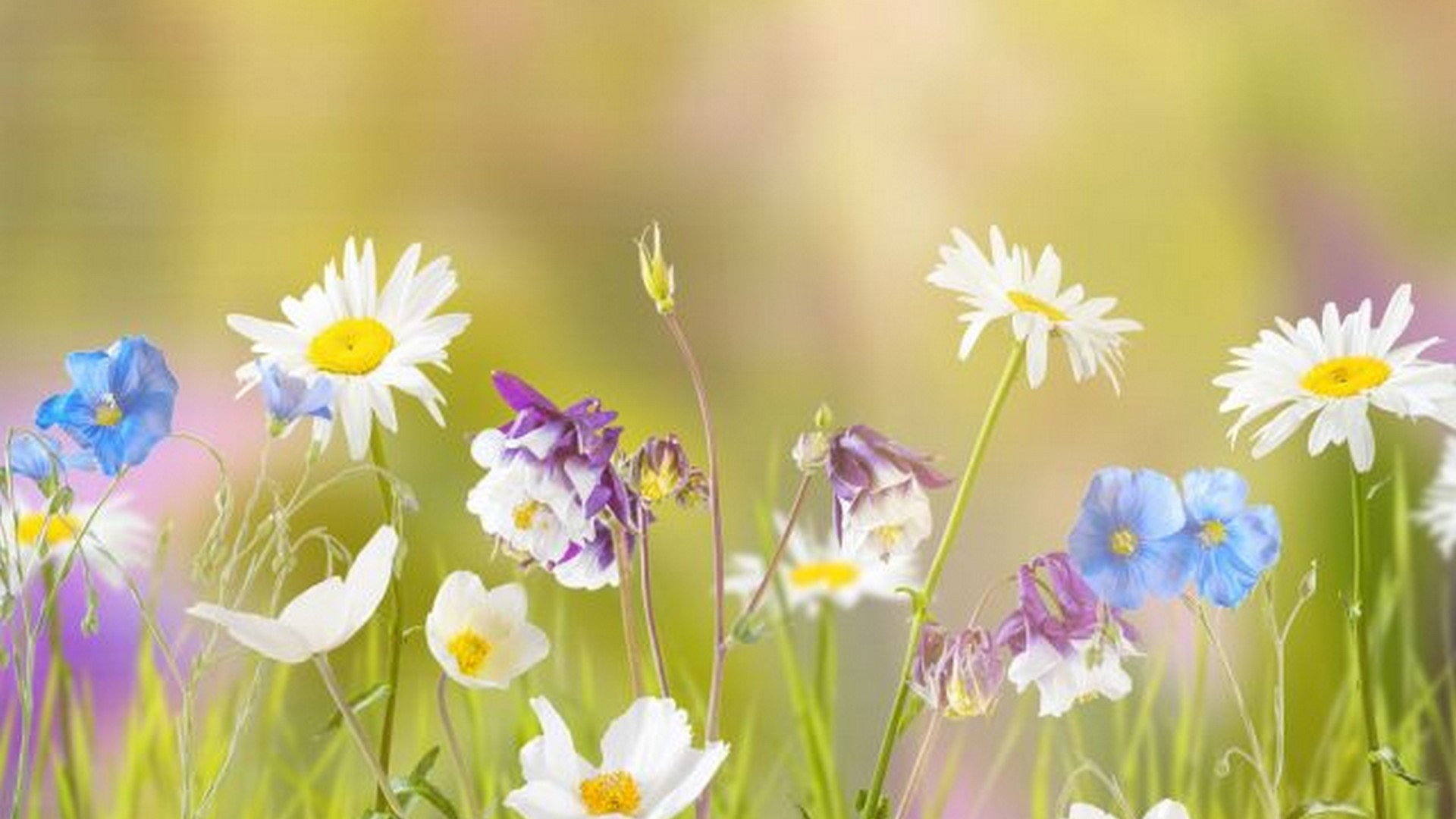 Cute Wallpapers For Springtime Early Spring Wallpaper For Desktop 2020 Cute Wallpapers