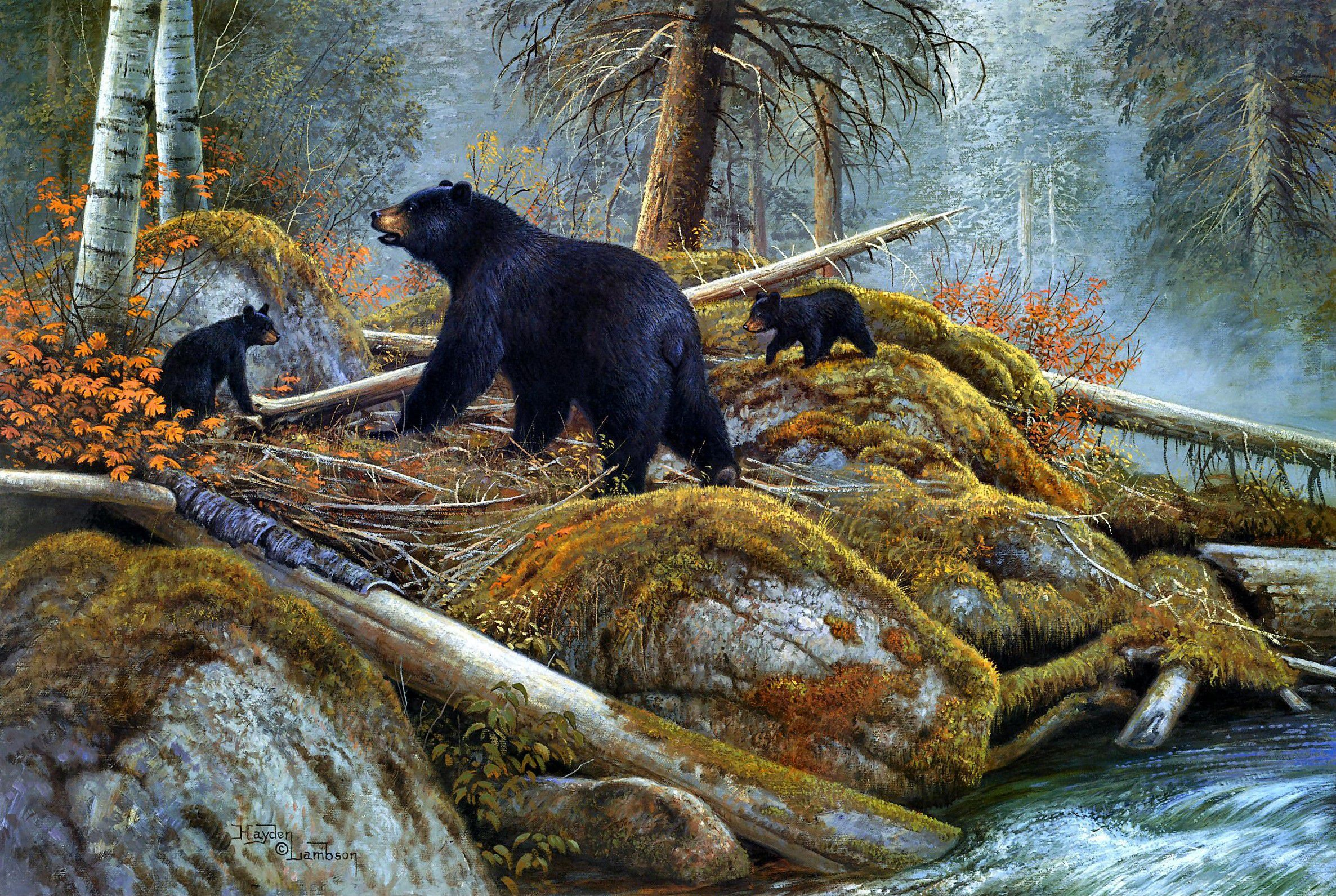 Fall Paintings Wallpaper Black Bear Wallpapers Backgrounds