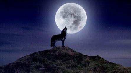 wolf howling moon wallpapers wolves background widescreen windows wallpapersafari wallpaperplay