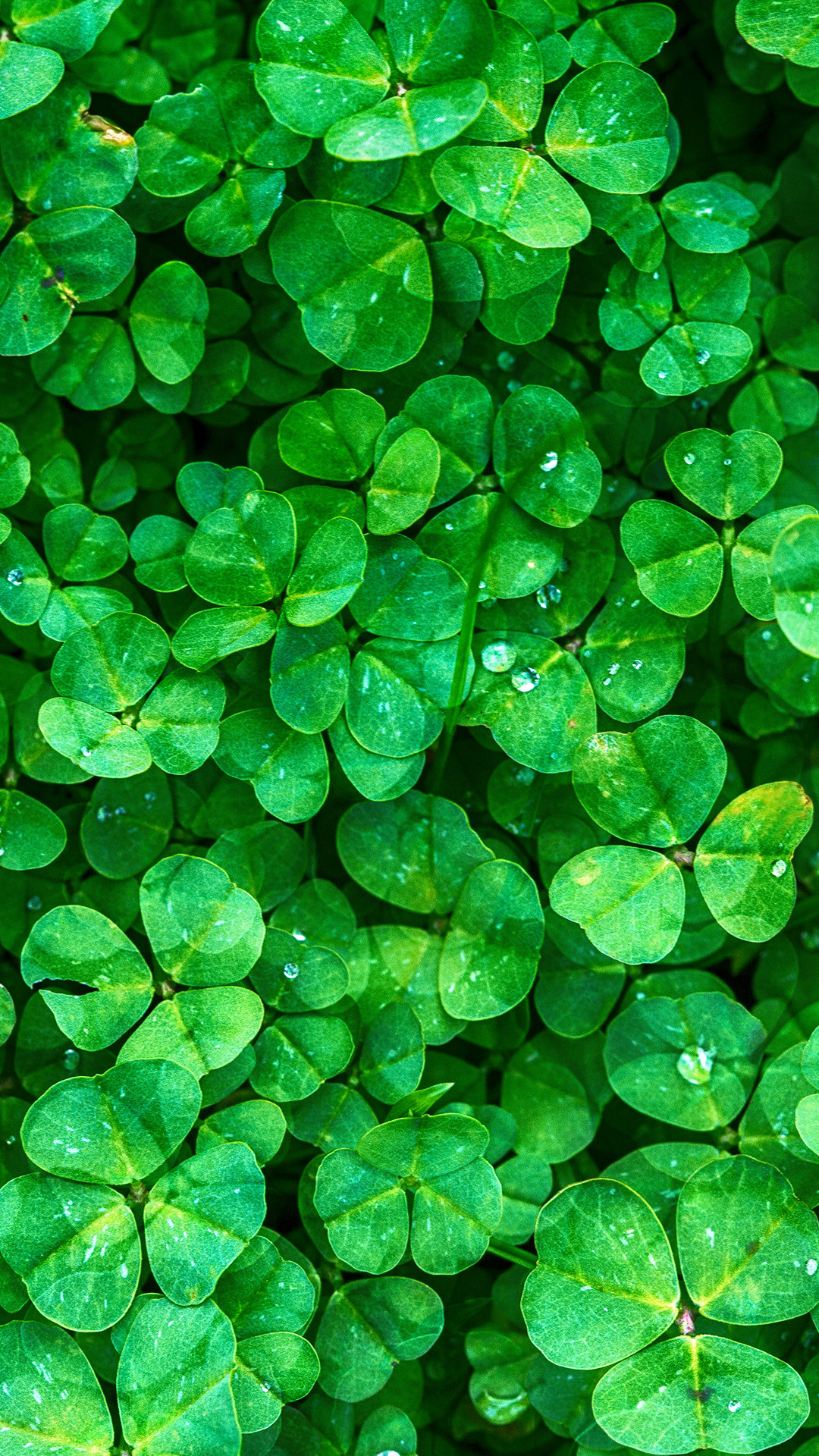 Taylor Swift Hd Wallpapers Download Shamrock Wallpaper 56 Pictures