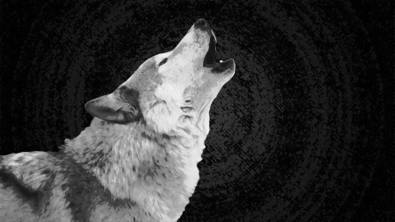 wolf wallpapers howling moon iphone definition backgrounds snow trippy cave wallpaperaccess getwallpapers deviantart