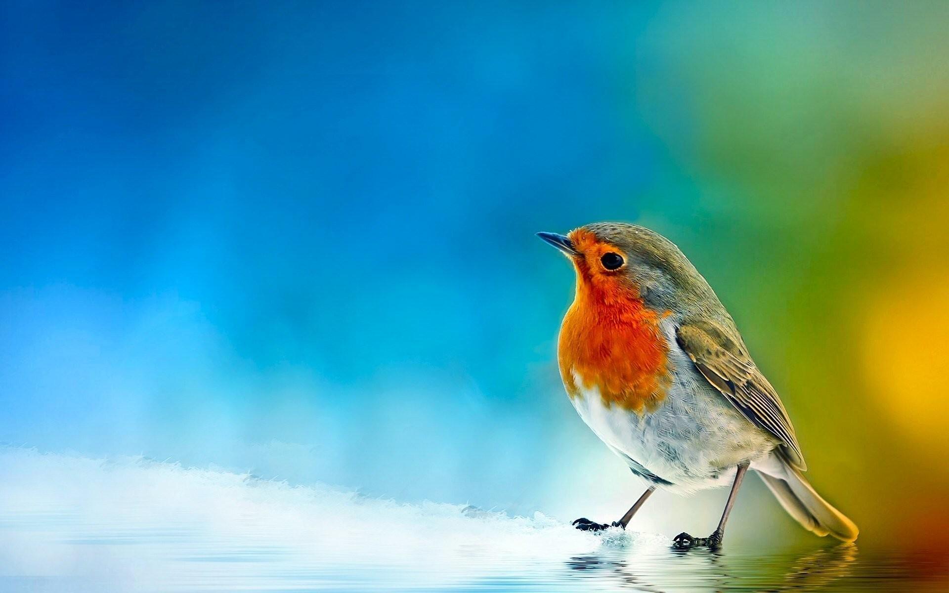 birds wallpaper 62 pictures