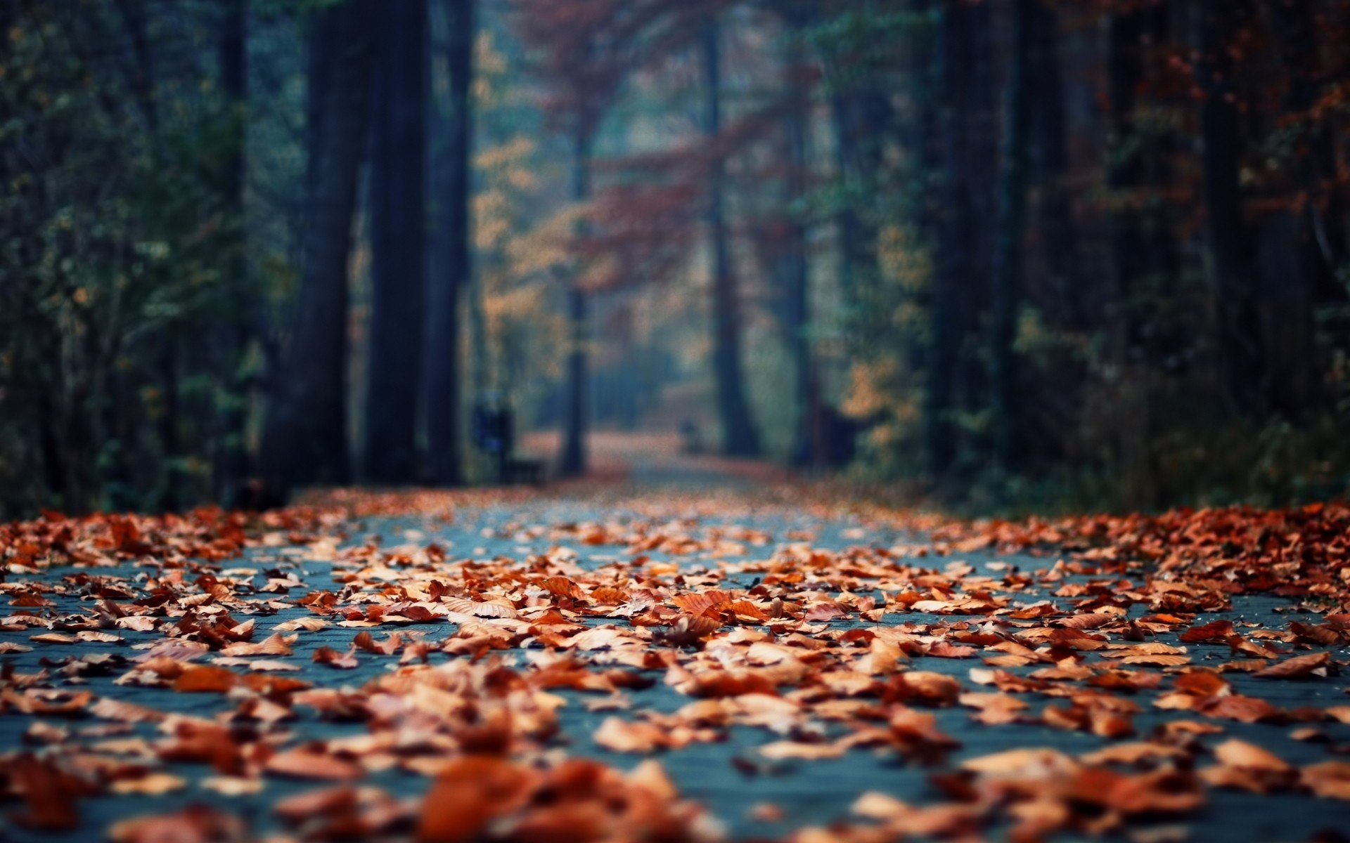 Cell Phone Fall Wallpaper Cute Fall Wallpaper 59 Pictures
