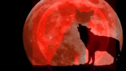 wolf moon howling she