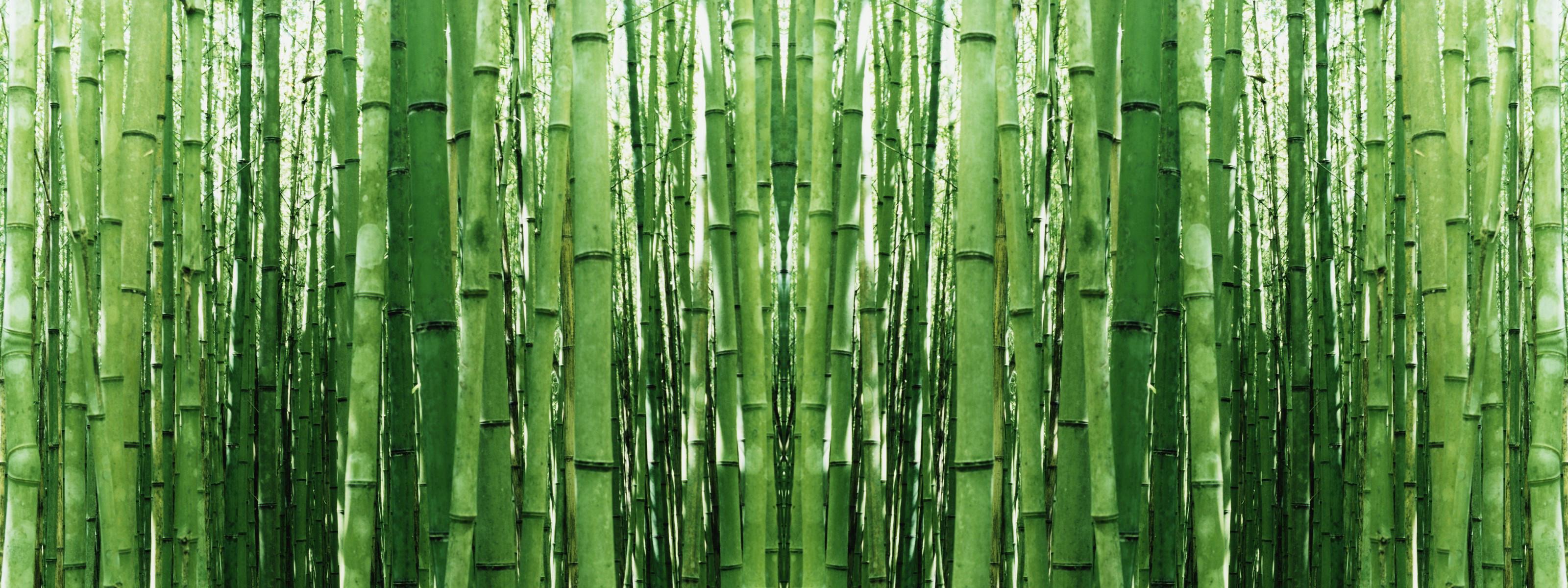 green bamboo wallpaper 63