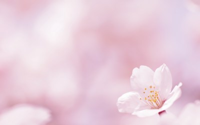 Pink Flower Wallpaper 74+ pictures