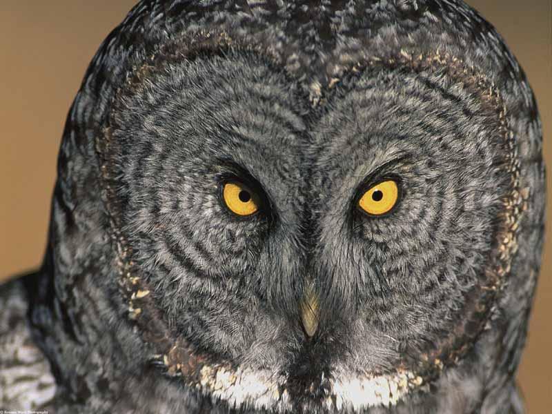 Animated Cartoon Wallpapers For Desktop Owl Wallpapers High Definition Wallpapers Cool Nature