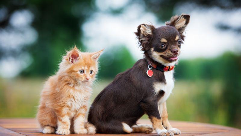 Cute Dog And Kitten Wallpaper Wallpaper Puppy Kitten Funny Animals 4k Animals 16150