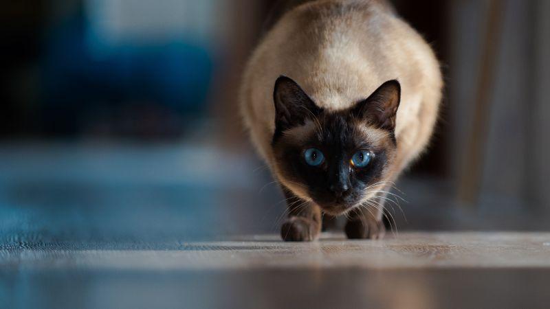 Cute Funny Kitten Wallpaper Pet Hd Wallpapers 4k Amp 8k Cute Animals For Desktop And Mobile