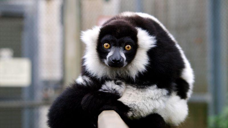 Download Cute Pets Wallpapers Wallpaper Lemur Cute Animals Funny Animals 4461