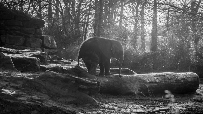 Amazing Quotes Wallpapers For Facebook Wallpaper Elephant Forest Sunlight Animals 5372