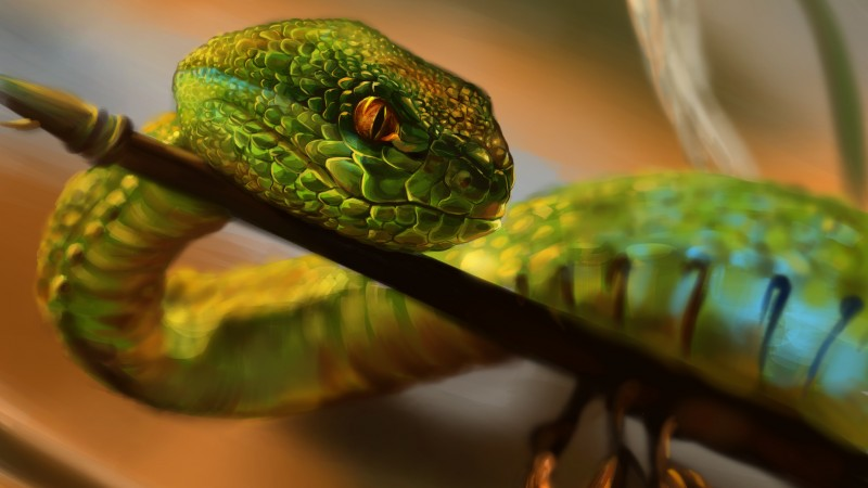 Albania Wallpaper Hd Wallpaper Snake Green Reptile Eyes Art Animals 712