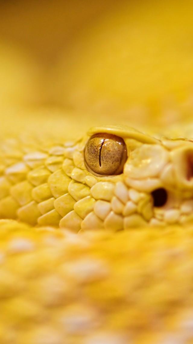 Hd Wallpaper Quotes For Android Wallpaper Snake 4k Hd Wallpaper Albino Rattlesnake