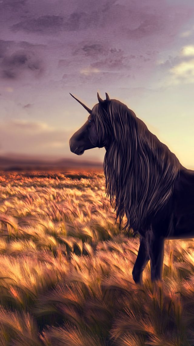 Cute Pony Wallpaper Wallpaper Unicorn Horse Nature Black Art 10309