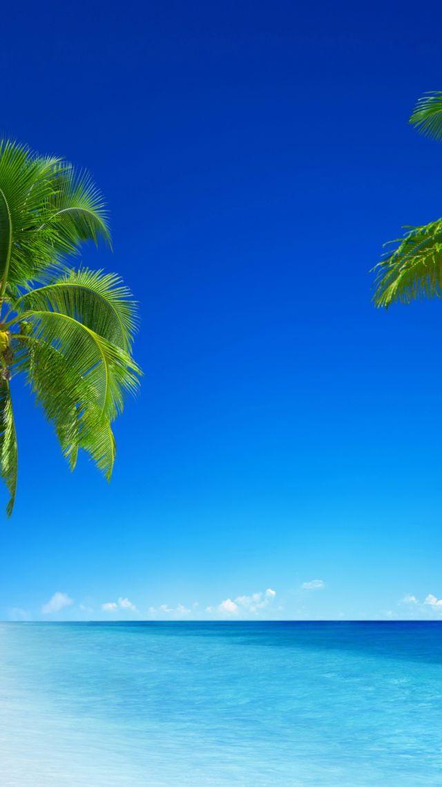 Electric Blue Wallpaper Hd Wallpaper Tropical Beach 5k 4k Wallpaper 8k Paradise