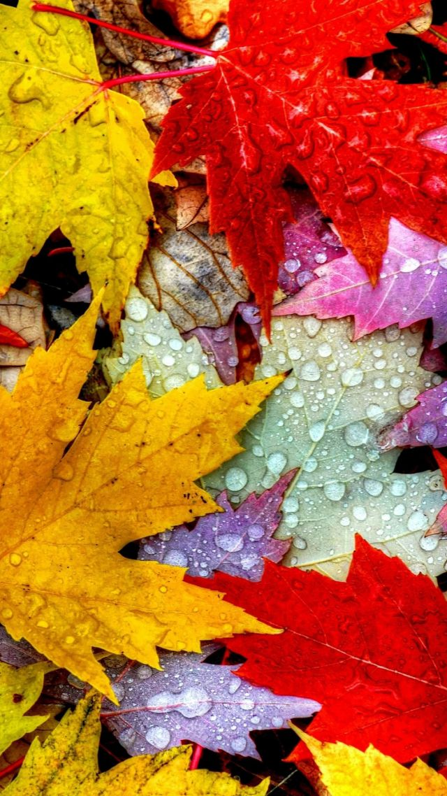 Fall Leaves Iphone Wallpaper Wallpaper Leaves 5k 4k Wallpaper Drops Rain Autumn