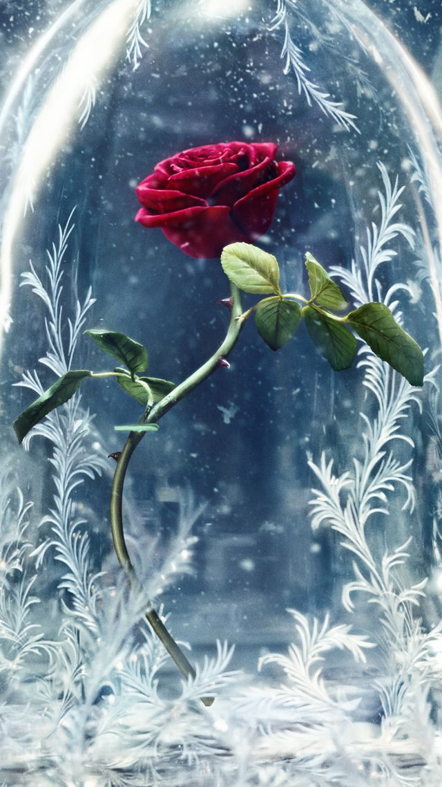 Beauty And The Beast Quotes Wallpaper Wallpaper Beauty And The Beast Glass Rose Best Movies