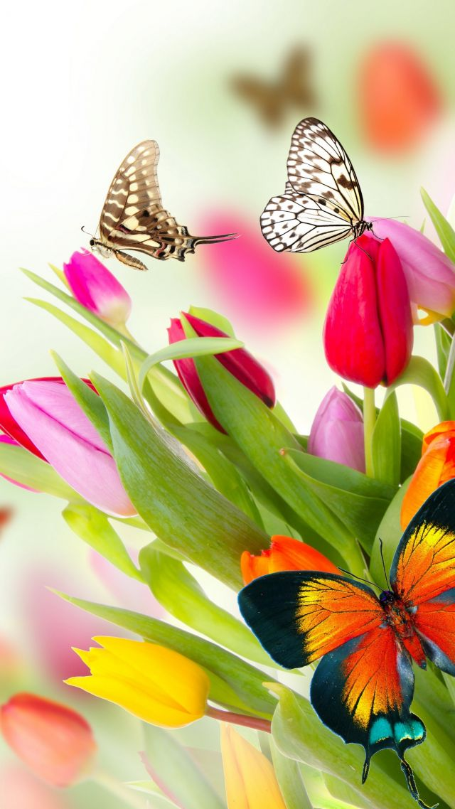 Free Animated Fall Wallpaper Wallpaper Butterfly Flowers Tulips 4k Nature 14993