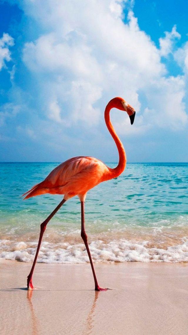 Cute Flamingo Wallpapers Wallpaper Flamingo Bird Beach Ocean 4k Animals 14997