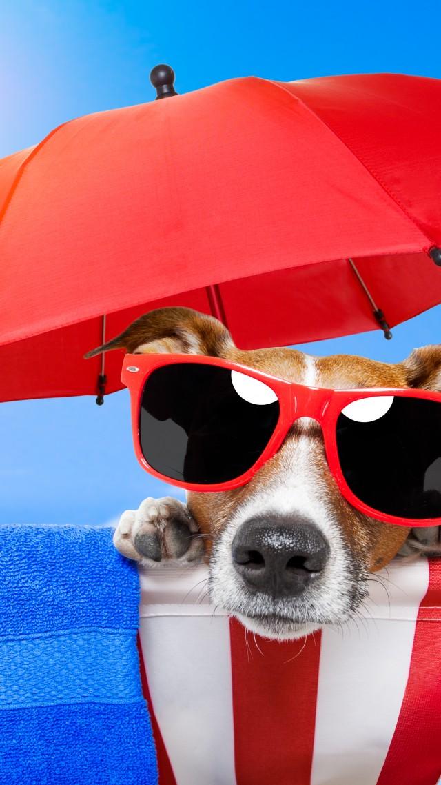 Cute Pet Animals Wallpapers Wallpaper Dog Puppy Sun Summer Beach Sunglasses