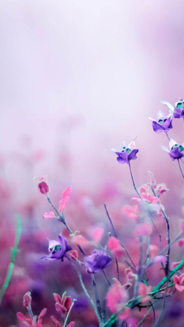 Apple Live Wallpaper Iphone 6 Wallpaper Flowers Purple 4k Nature 16035