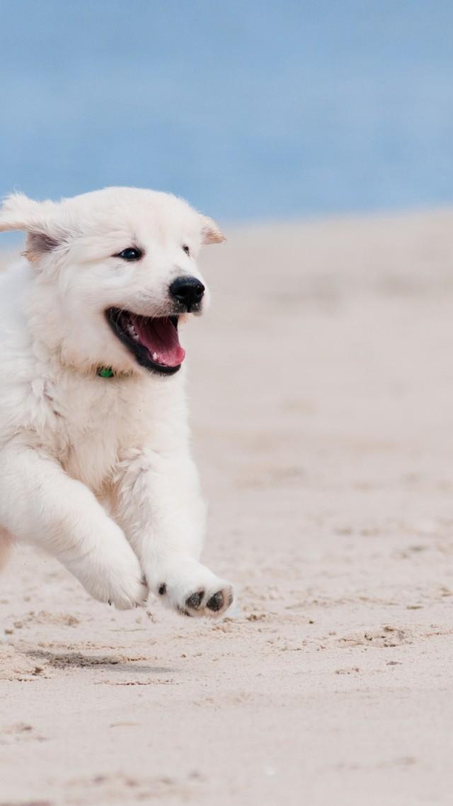Cute Love Cartoon Wallpaper Hd Wallpaper Dog Puppy White Animal Pet Beach Sand Sea