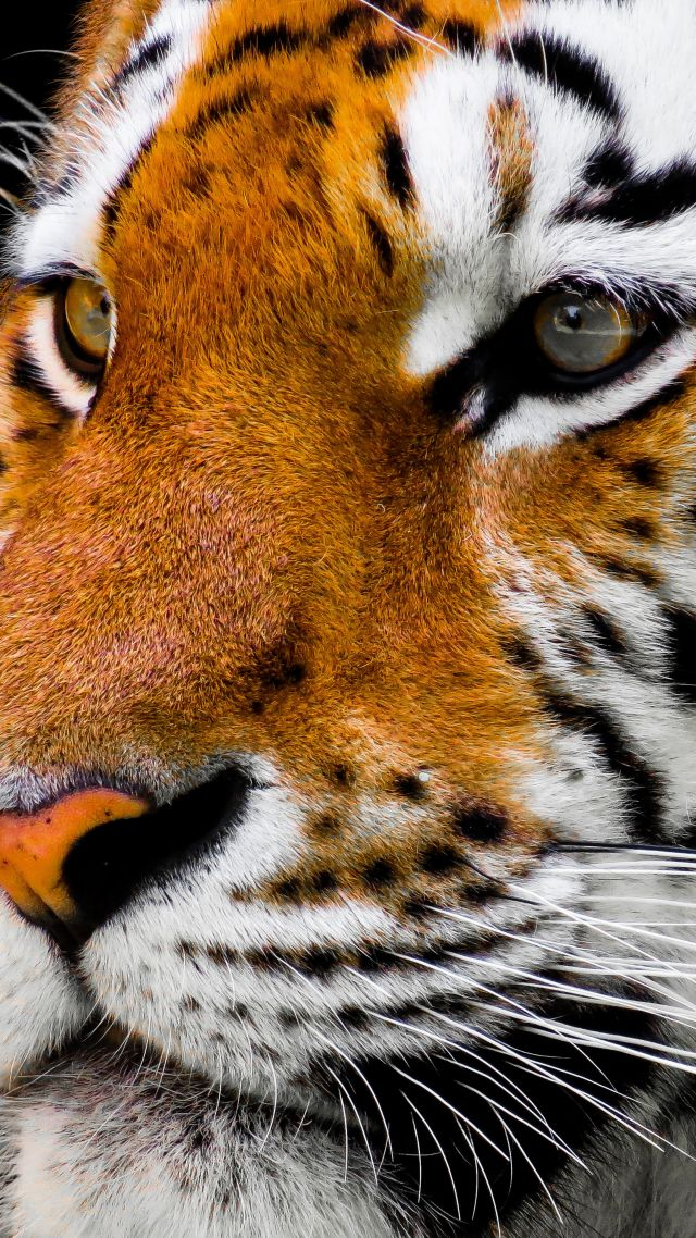 Funny Hd Animal Wallpapers Wallpaper Tiger Cute Animals 4k Animals 16738